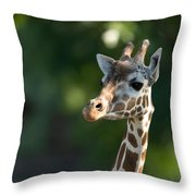 Reticulated Giraffe At The Omaha Zoo Throw Pillow