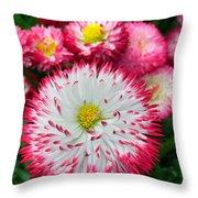 Rhineland-palatinate Greenhouse Throw Pillow
