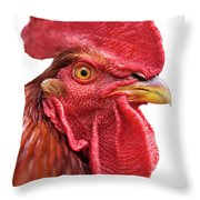 Rhode Island Red Rooster Isolated On White Throw Pillow