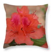 Rhododendrum Oldhamii Throw Pillow