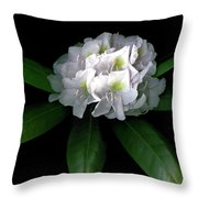 Rhody Queen - White Throw Pillow