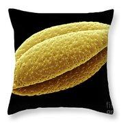 Rhubarb Pollen, Sem Throw Pillow