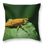 Rhubarb Weevil Throw Pillow