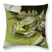 Ribbet In The Pond Throw Pillow