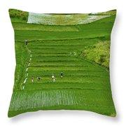 Rice Fields Throw Pillow