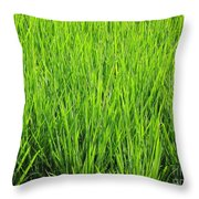 Rice Plants Throw Pillow