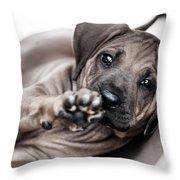 Ridgeback Paw Throw Pillow