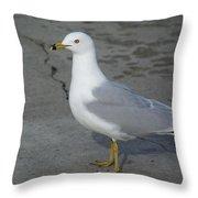 Ring-billed Gull Throw Pillow