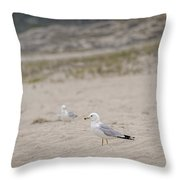 Ring - Billed Gull Throw Pillow