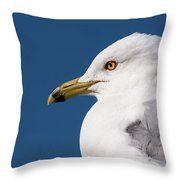 Ring-billed Gull Portrait Throw Pillow