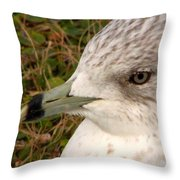 Ring Billed Gull Profile Throw Pillow