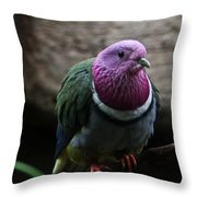 Ring Necked Dove Throw Pillow