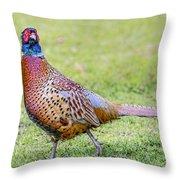 Ring-necked Pheasant Throw Pillow