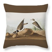 Ring Plover  Throw Pillow