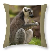 Ring-tailed Lemur Holding A Clump Of Grass Throw Pillow