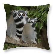 Ring-tailed Lemurs Throw Pillow