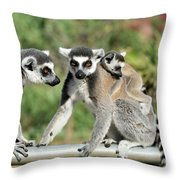 Ring Tailed Lemurs With Baby Throw Pillow