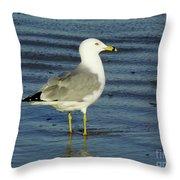 Ringed Billed Sea Gull Throw Pillow