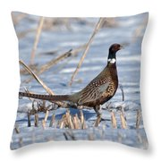 Ringneck Pheasant Rooster In Snow Throw Pillow