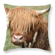 Ringo - Highland Cow Throw Pillow