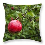 Ripe Apples. Throw Pillow by John Greim
