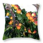 Ripe Apricots Throw Pillow