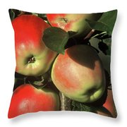 Ripening Apples Throw Pillow