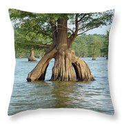 Ripley Tennessee Cypress Throw Pillow