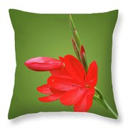 Ritzy Red Throw Pillow