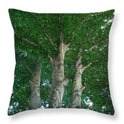 River Birches Throw Pillow
