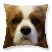 River Dog Closeup Throw Pillow