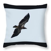 Riverwalk Juvie Bald Eagle Throw Pillow