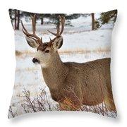 Rmnp Mule Deer 2 Throw Pillow