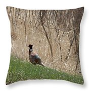 Roadside Rooster Pheasant Throw Pillow