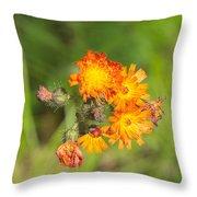 Roadside Wildflower Throw Pillow