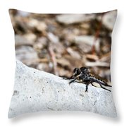 Robber Fly Stalking Throw Pillow