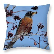 Robin Eating A Red Berry Throw Pillow