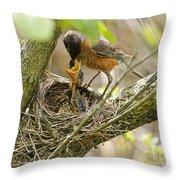 Robin Feeding Young Throw Pillow
