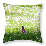 Robin In A Field Of Daisies Throw Pillow