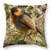 Robin In Hedgerow 3 Throw Pillow