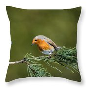Robin In The Garden Throw Pillow