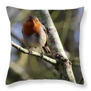 Robin On Branch Donegal Throw Pillow