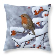Robin On Snow-covered Rose Hips Throw Pillow