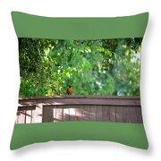 Robin On The Backyard Fence Throw Pillow