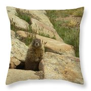 Rock Critter Throw Pillow