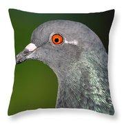 Rock Dove Throw Pillow