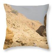Rock Hyrax Procavia Capensis Throw Pillow