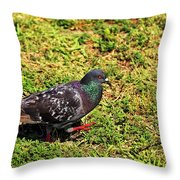 Rock Pigeon Throw Pillow