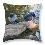 Rock Doves Throw Pillow
