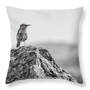Rock Wren 2bw Throw Pillow
